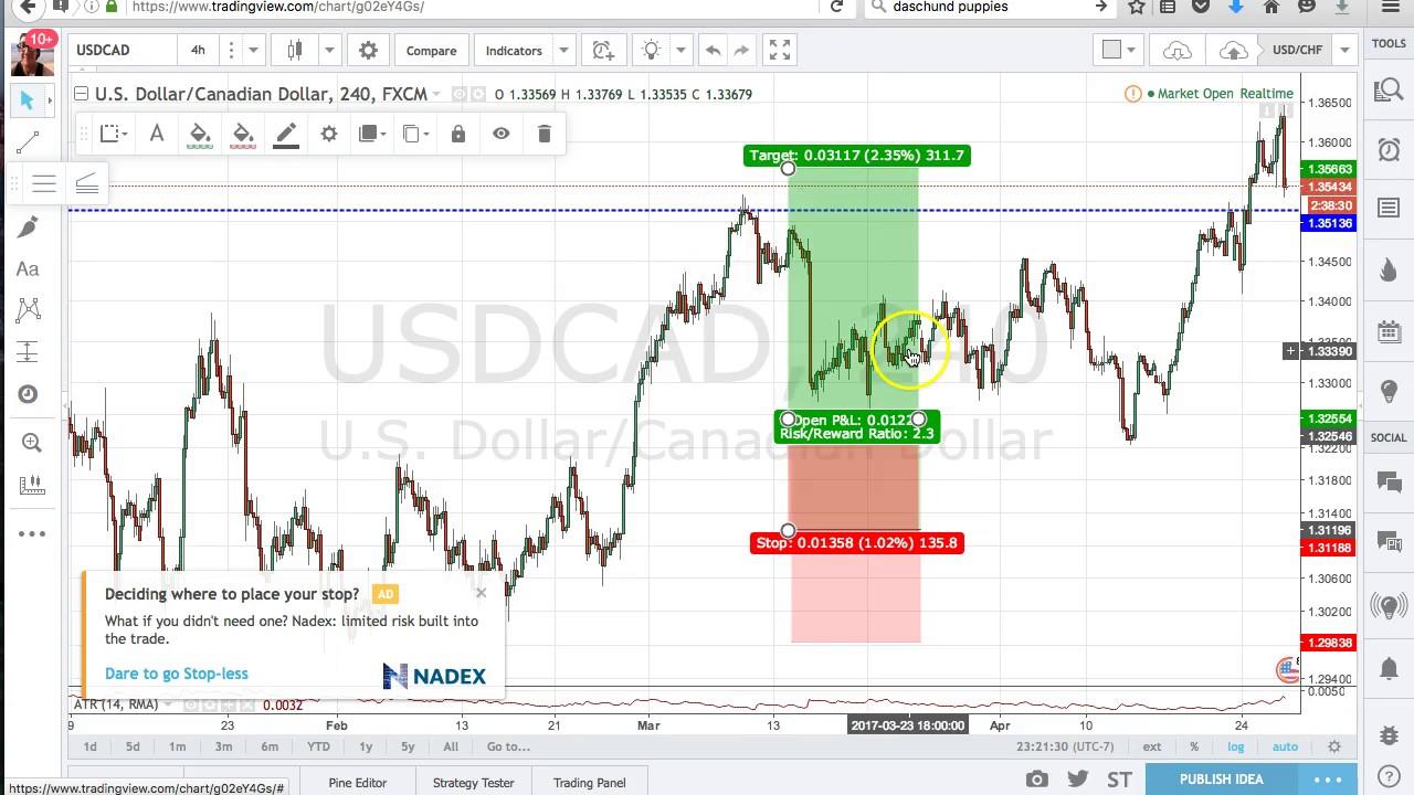 software forex gratis trading binario opinioni demo